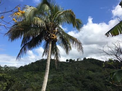 Palm tree at my grandparents farm.